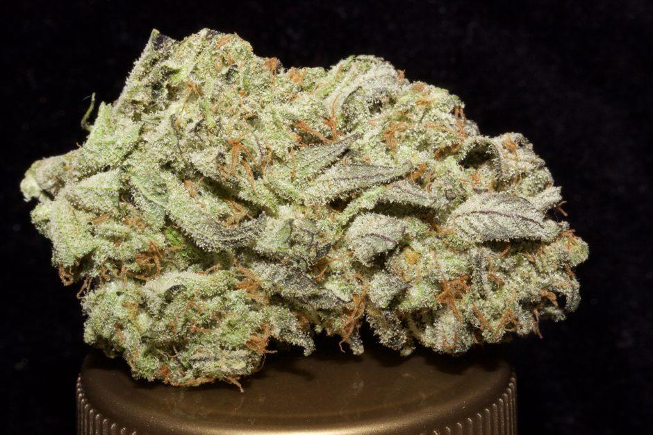 Killer Queen Marijuana Strain Review | Here 4 The Flavor Smarties Strain