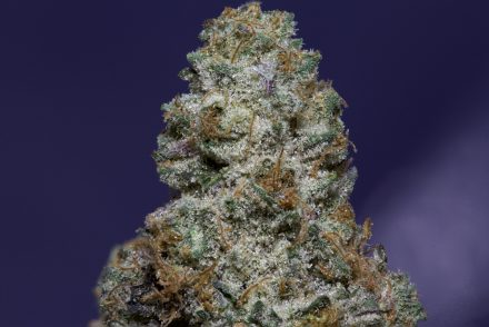 Cookies and Cream Strain
