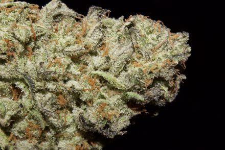 Killer Queen Strain Review