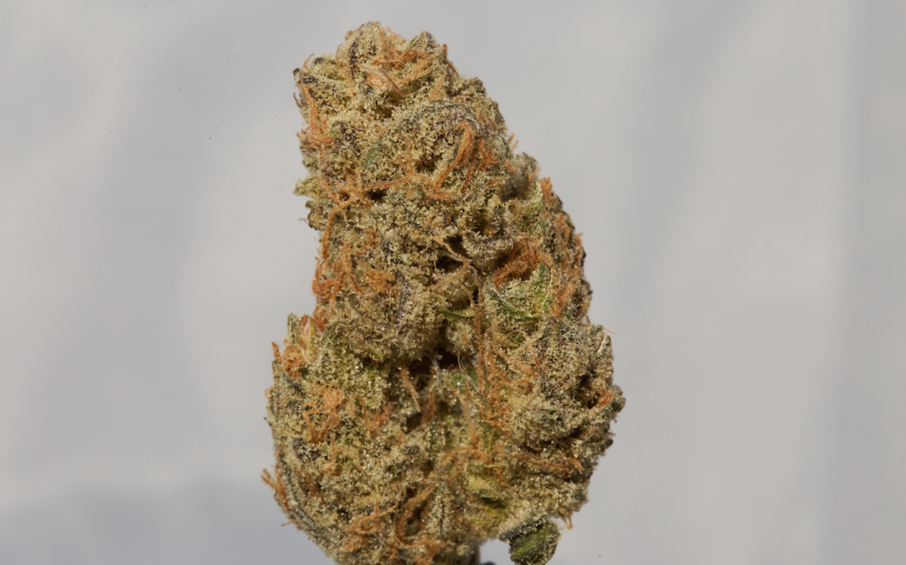 Honey Bananas Strain Review Here 4 The Flavor