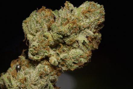 Tahoe OG strain